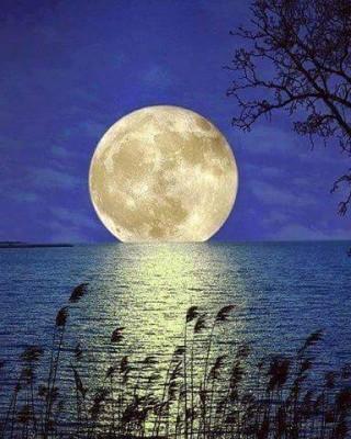 本日は満月です(^^♪