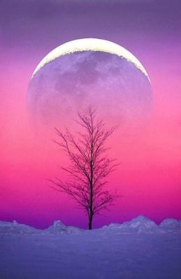 今夜は満月です!